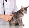 Ветеринарные клиники в Омонске